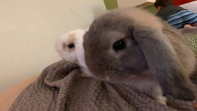 Photo of Have You Seen These Bunnies – Reward Offered