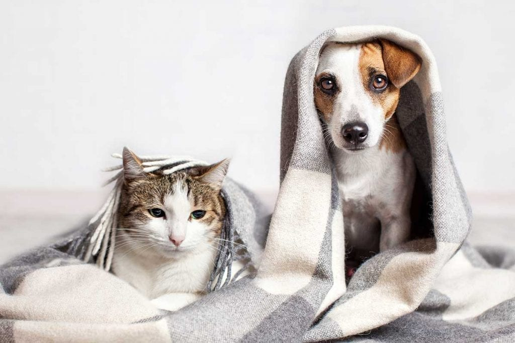 Dont-Forget-Pets & Thanksgiving Meal Tips and Hurricane Season