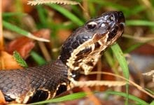 Photo of See The Snakes In Louisiana's Swamps