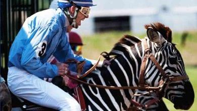 Photo of Exotic Animal Racing 2020