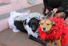 Photo of Krewe of Barkus Parade