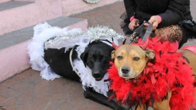 Photo of Krewe of Barkus Parade