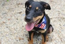 Photo of Keep Your Pets Safe This Fourth of July Weekend