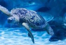 Photo of Audubon Aquarium of the Americas opens July 16