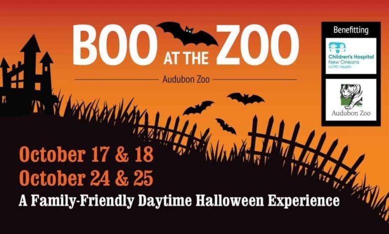 Peek-A-Boo At The Zoo
