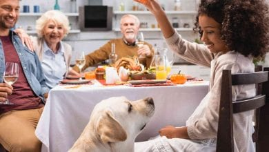 Photo of Pet Thanksgiving Meal Tips