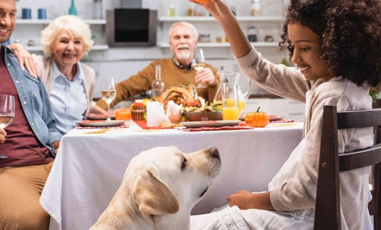 Pet Thanksgiving Meal Tips