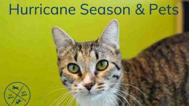 Hurricane Season And Pets